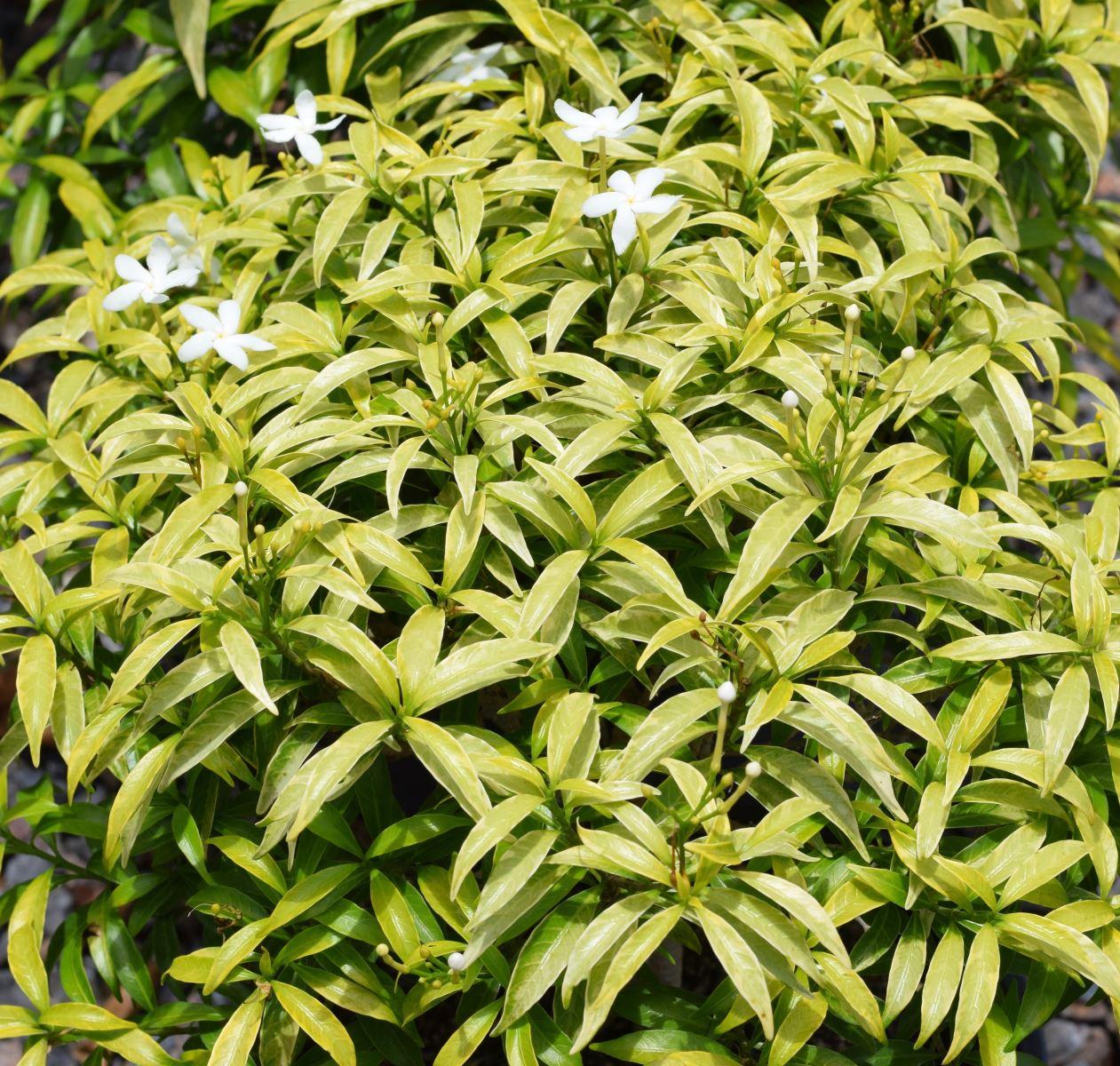 Darwin Plant Wholesalers